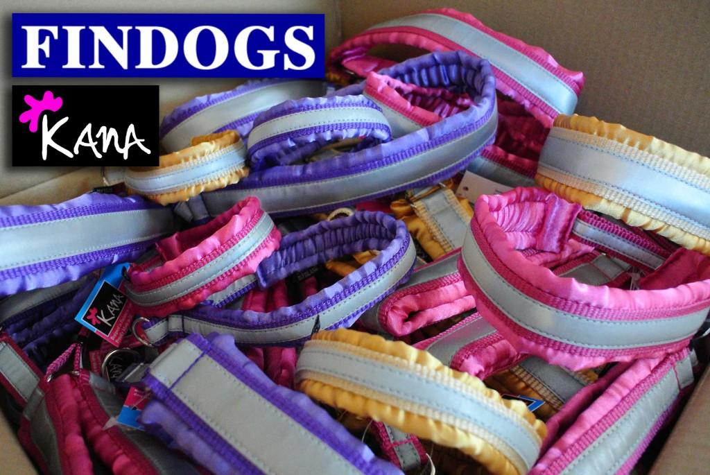 FinDogs-22.1.16WEBlogoilla